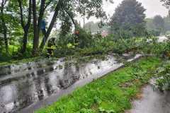 2021-08-08-Baum-auf-Strasse-2
