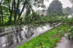 2021-08-08-Baum-auf-Strasse-3
